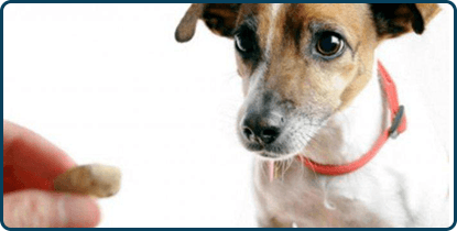Pets Behavioral Counseling